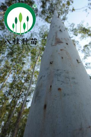 13-宣传册大树(加水印)