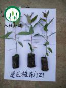 29-宣传册树苗(加水印)