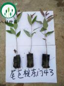 43-宣传册树苗(加水印)