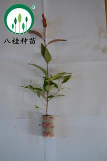 26-树苗(加水印3M)