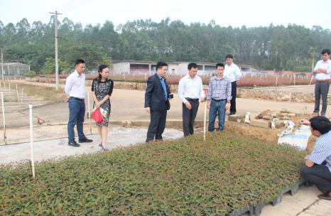越南纸业总公司黄国林董事长一行到东门苗圃参观考察