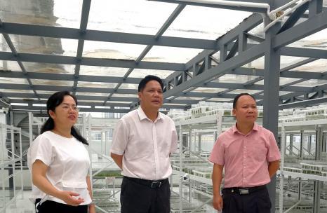 邱炳发到高新区组培厂调研指导工作