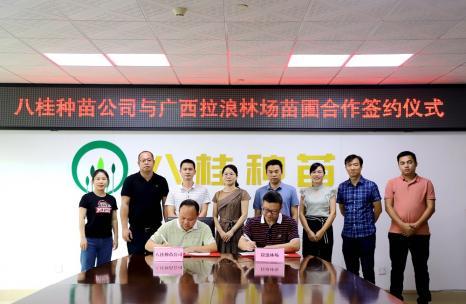八桂种苗公司与拉浪林场签署合作协议