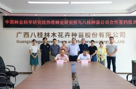 八桂种苗公司与中国热林研究所签署授权协议